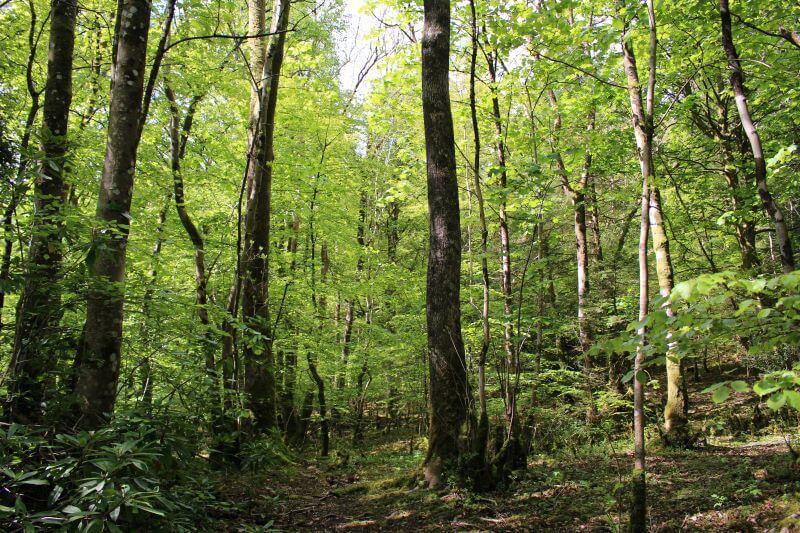 woods beside Derwentwater