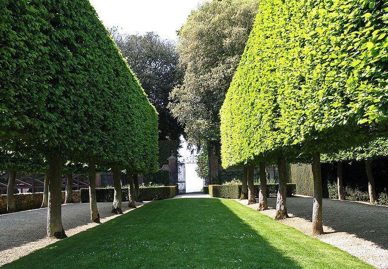 The Stilt Garden at Hidcote