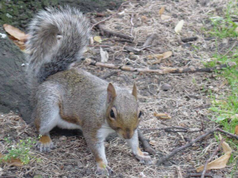 squirrel at Cheltenham Minster, St Mary's