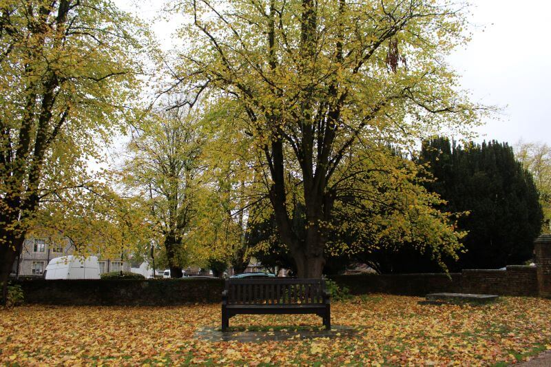 a bench with coloured leaves